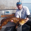 BIG  lingcod on the swimbait