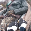 Barrow's goldeneye hunt